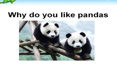 《Why do you like pandas》课件设计PPT