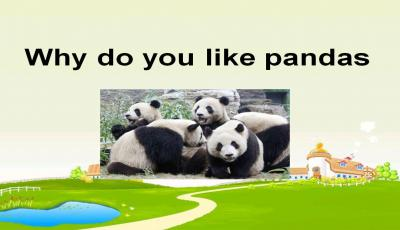 《Why do you like pandas》简析课件PPT